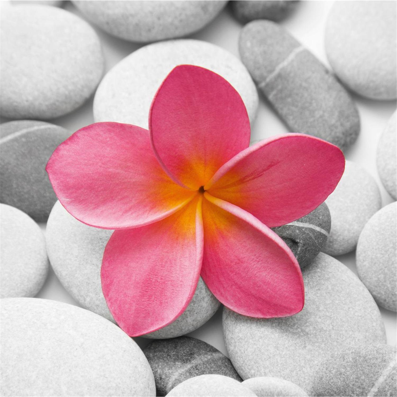 Deco Glass Wall Decor - Art on Glass - Beautiful Pink Flower 11.75 ...