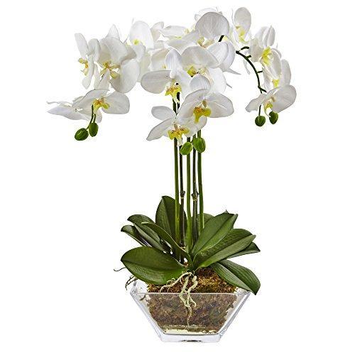 Triple Phalaenopsis Orchid in Glass Vase [Item # 4570D]