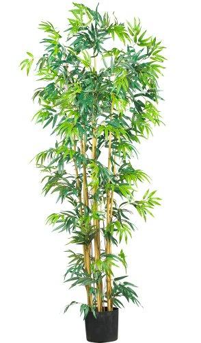 6' Bambusa Bamboo Silk Tree
