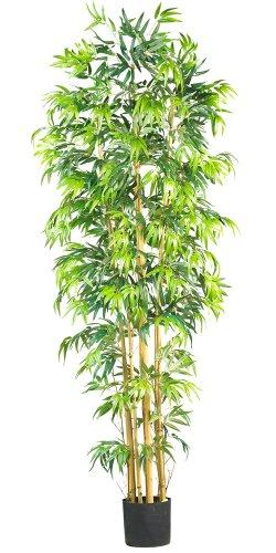7' Bambusa Bamboo Silk Tree