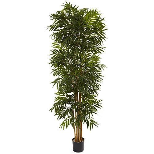 7.5? Phoenix Palm Tree