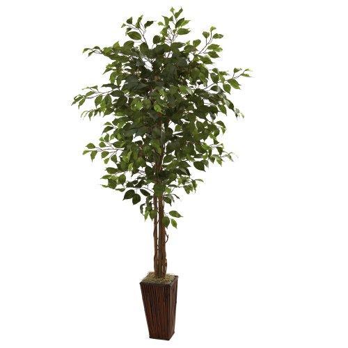 6' Ficus Tree w/Bamboo Planter
