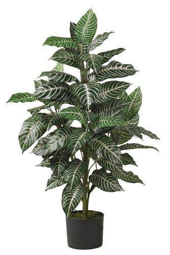 3' Zebra Silk Plant