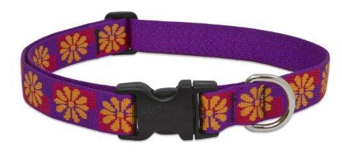 Lupine Collars & Leads 78553 Collar 1X16-28