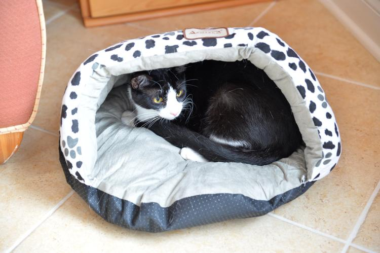Armarkat Paw Print Cat Bed
