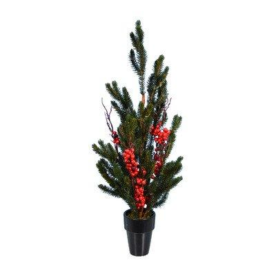 Spruce Pine Red Berry Tree