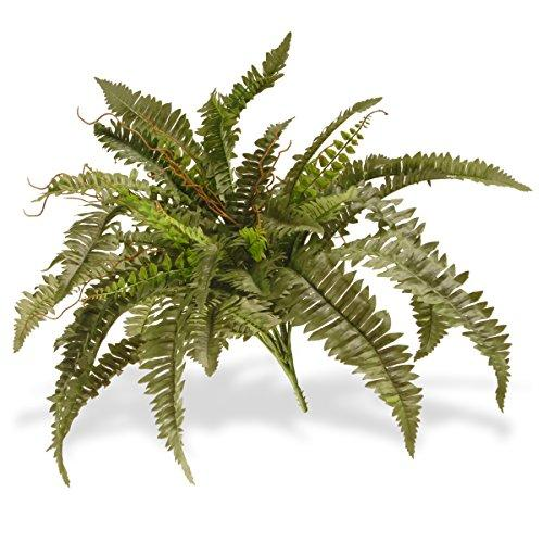 National Tree Garden Accents Boston Fern Plant