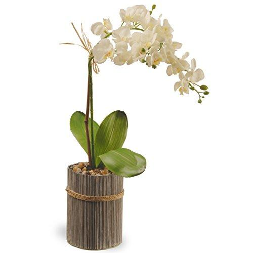 National Tree Garden Accents Potted Orchid
