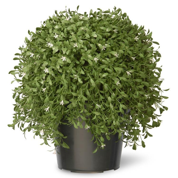 National Tree Artificial Argentea Plant [Item # LAR4-700-18]