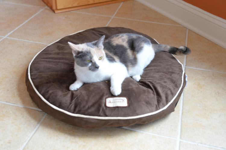 Armarkat Pet Bed Pad
