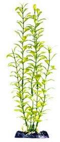 13? Blooming Ludwigia (Green)