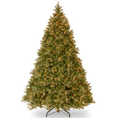Downswept Douglas Fir Tree with Clear Lights