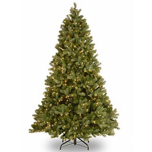 Downswept Douglas Fir Tree with Clear Lights