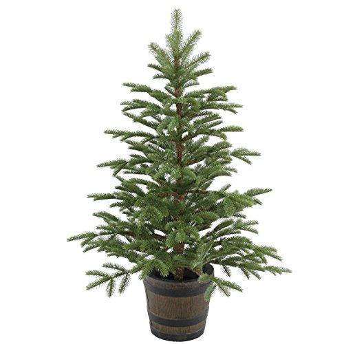 National Tree Norwegian Spruce Entrance Tree