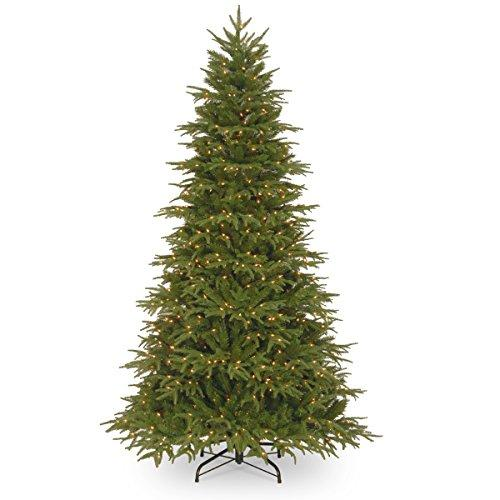 Northern Frasier Fir Tree with Clear Lights