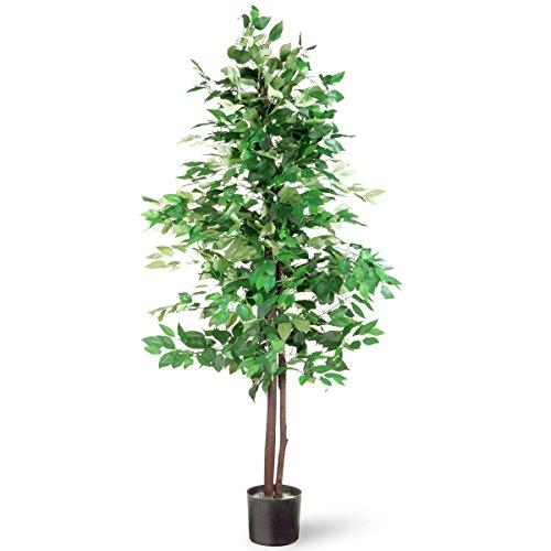 National Tree Potted Ficus Tree