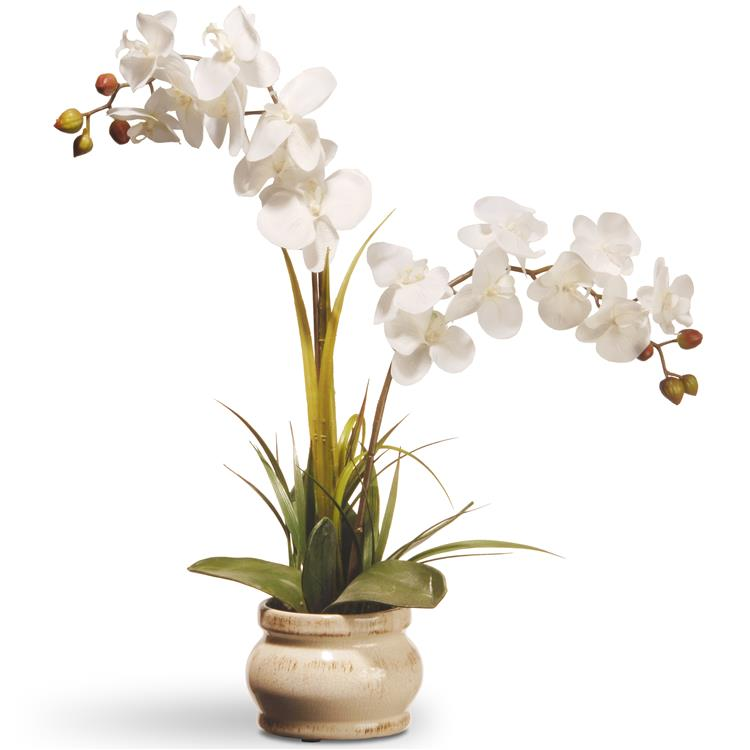 National Tree 24 inch White Potted Orchid Flower [Item # RAS-N071060-1]