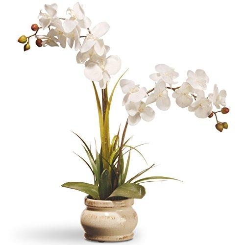 National Tree White Potted Orchid Flower [Item # RAS-N071060-1]