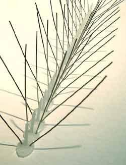 Narrow Stainless Steel Bird Spikes, 10 ft