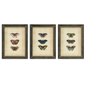 Set of 3 Butterfly Collection Wall Art
