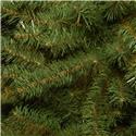 kcdr_60_3_jpg_national_tree_kincaid_spruce_tr.Jpeg